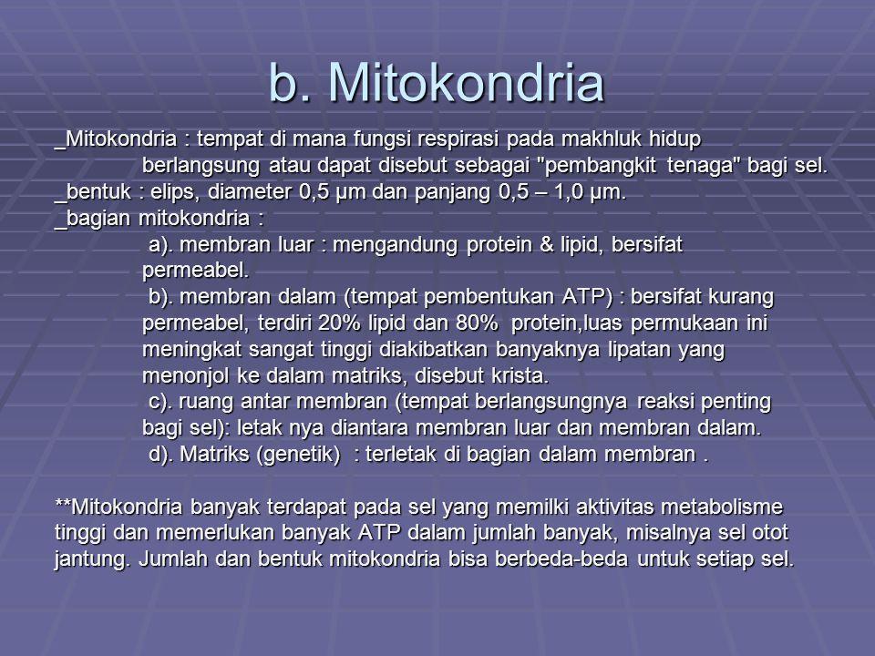b. Mitokondria