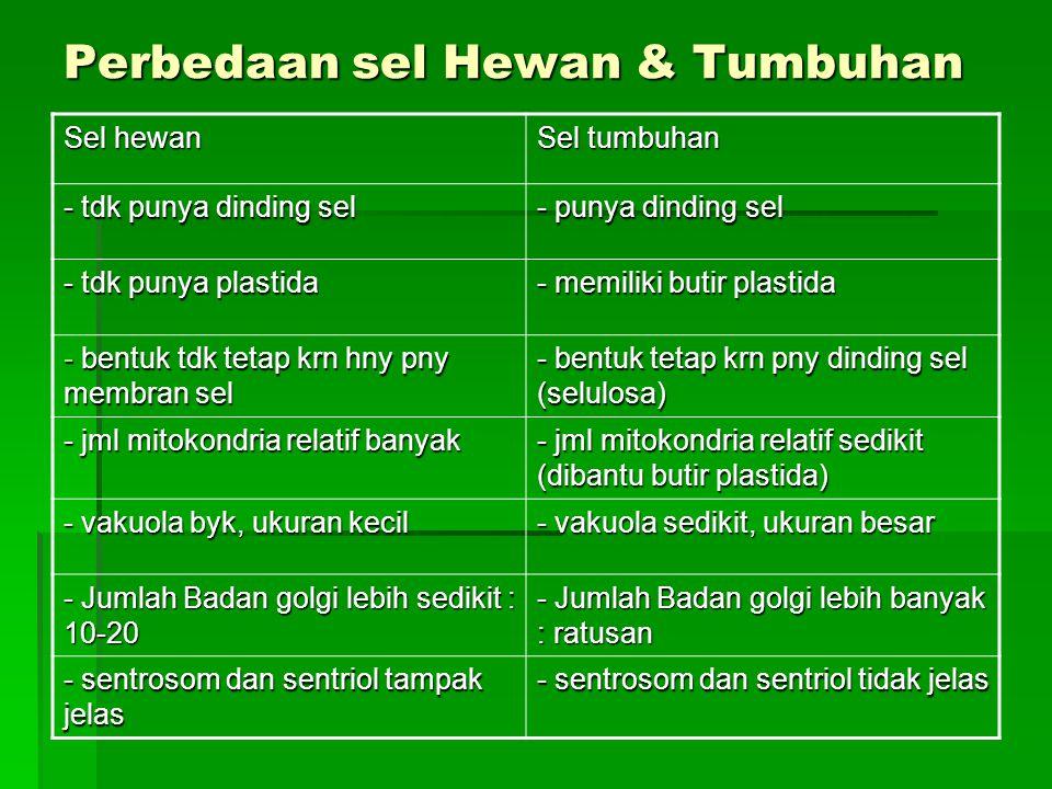 Perbedaan sel Hewan & Tumbuhan