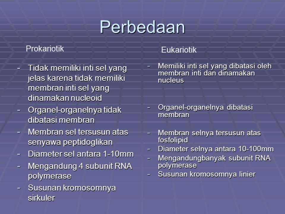 Perbedaan Prokariotik. Eukariotik. Tidak memiliki inti sel yang jelas karena tidak memiliki membran inti sel yang dinamakan nucleoid.