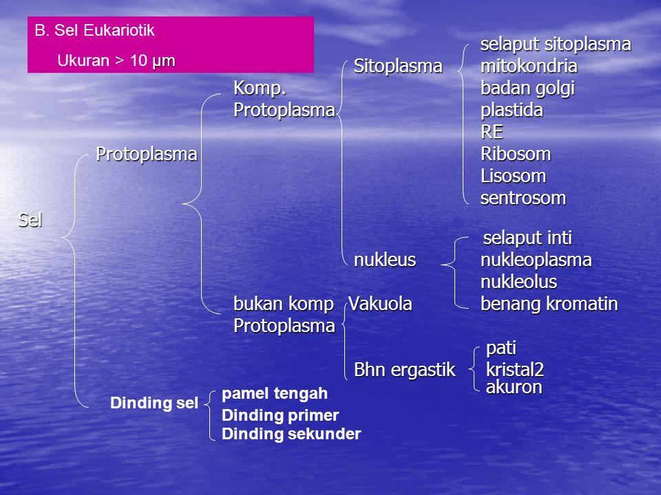 Sitoplasma mitokondria Komp. badan golgi Protoplasma plastida RE