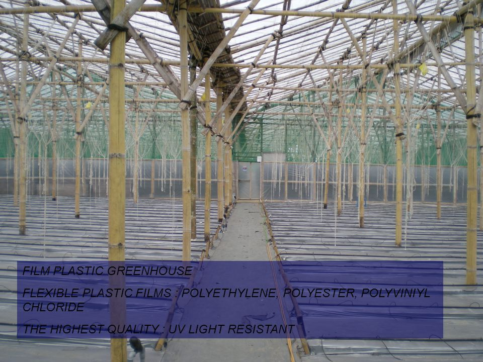 FILM PLASTIC GREENHOUSE