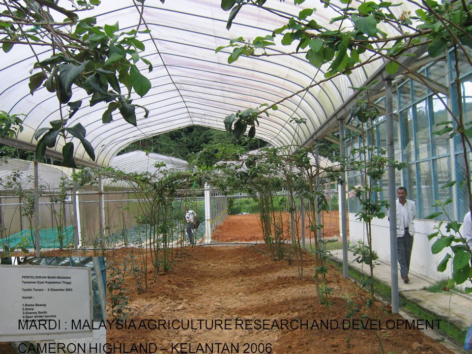 MARDI : MALAYSIA AGRICULTURE RESEARCH AND DEVELOPMENT