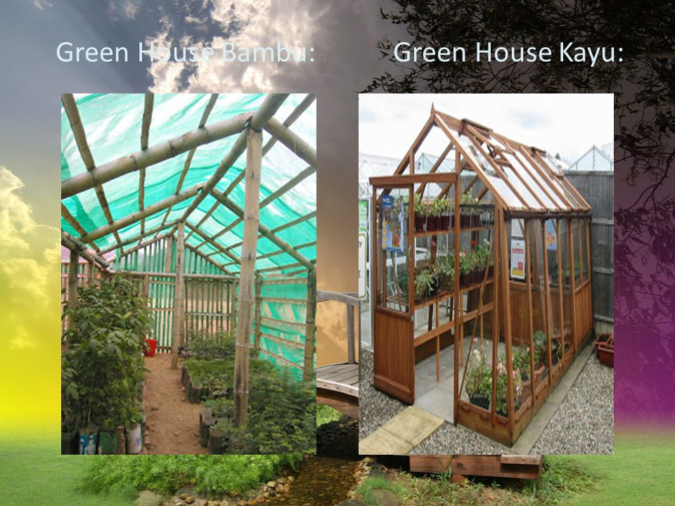 Green House Bambu: Green House Kayu: