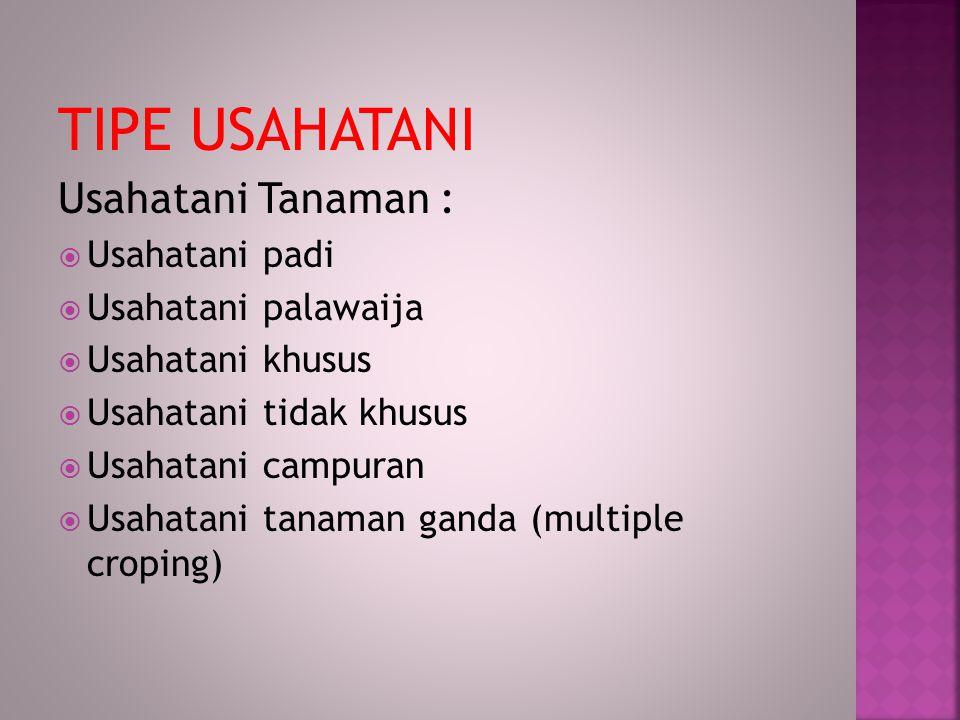 TIPE USAHATANI Usahatani Tanaman : Usahatani padi Usahatani palawaija