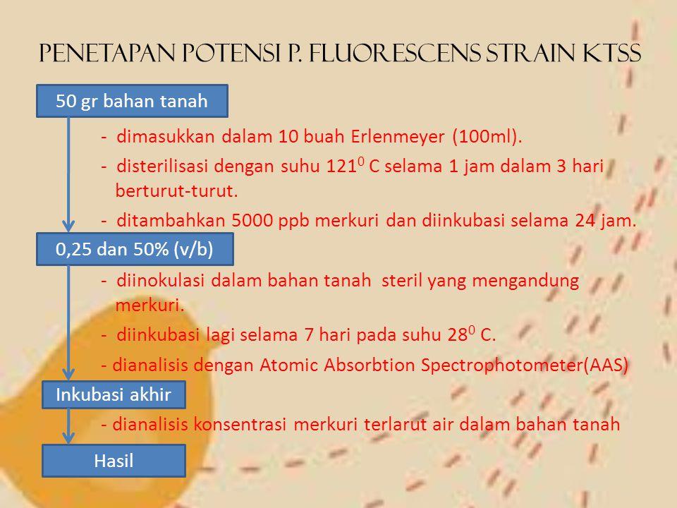 Penetapan Potensi P. Fluorescens strain KTSS