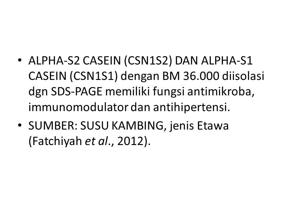 ALPHA-S2 CASEIN (CSN1S2) DAN ALPHA-S1 CASEIN (CSN1S1) dengan BM 36