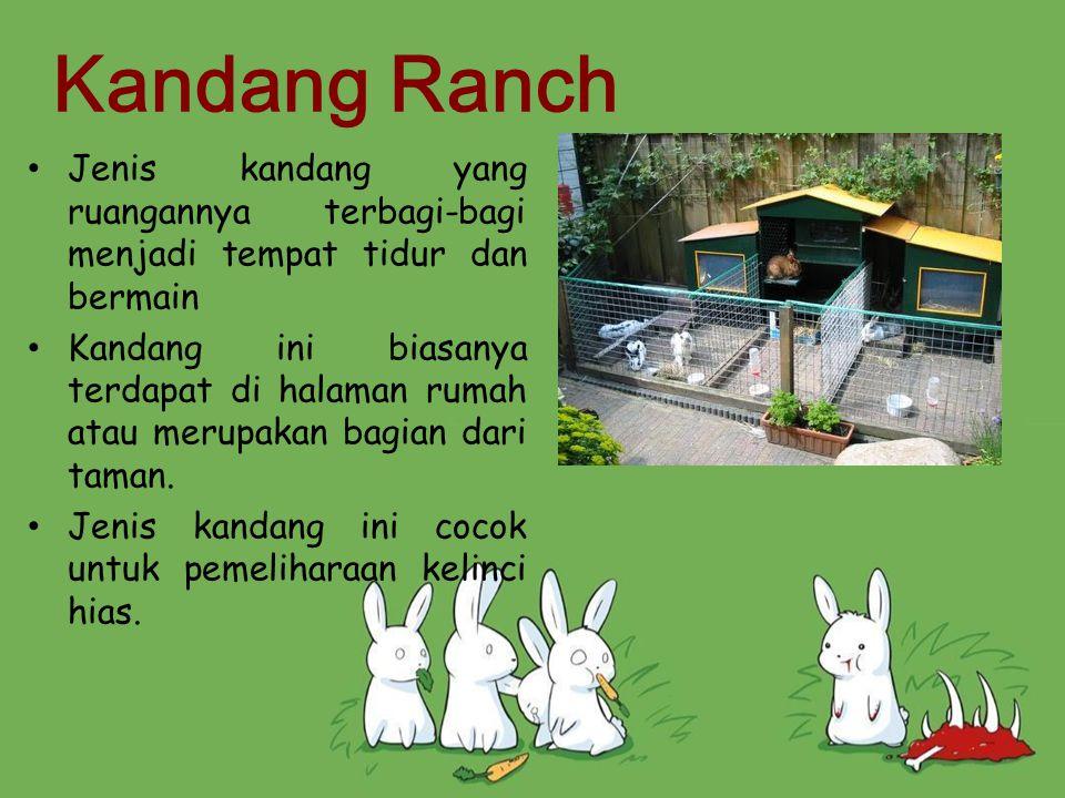 Kandang Ranch Jenis kandang yang ruangannya terbagi-bagi menjadi tempat tidur dan bermain.
