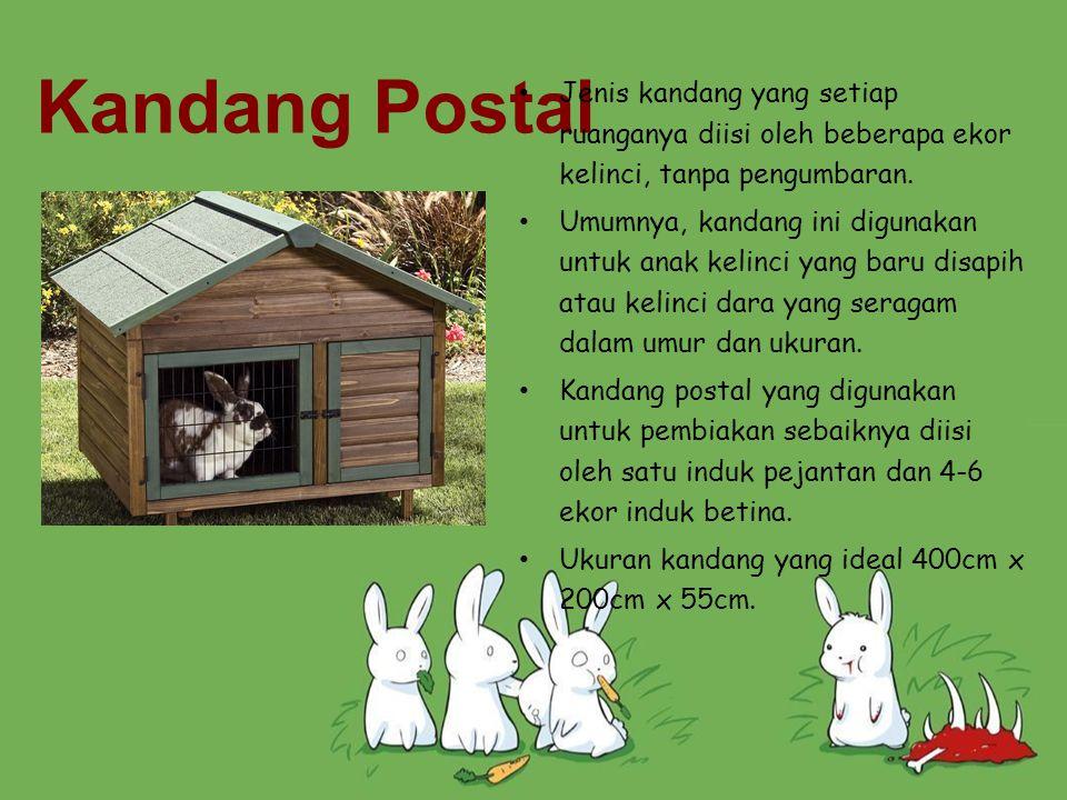 Kandang Postal Jenis kandang yang setiap ruanganya diisi oleh beberapa ekor kelinci, tanpa pengumbaran.