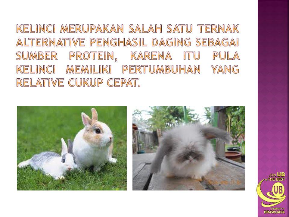 Kelinci merupakan salah satu ternak alternative penghasil daging sebagai sumber protein, karena itu pula kelinci memiliki pertumbuhan yang relative cukup cepat.