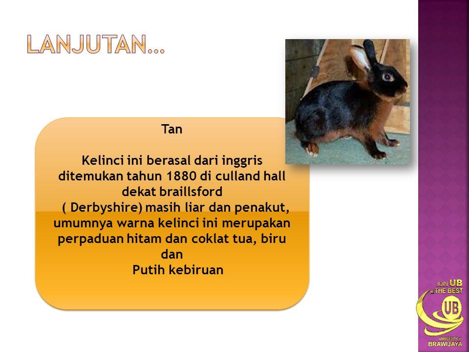 Lanjutan… Tan. Kelinci ini berasal dari inggris ditemukan tahun 1880 di culland hall dekat braillsford.