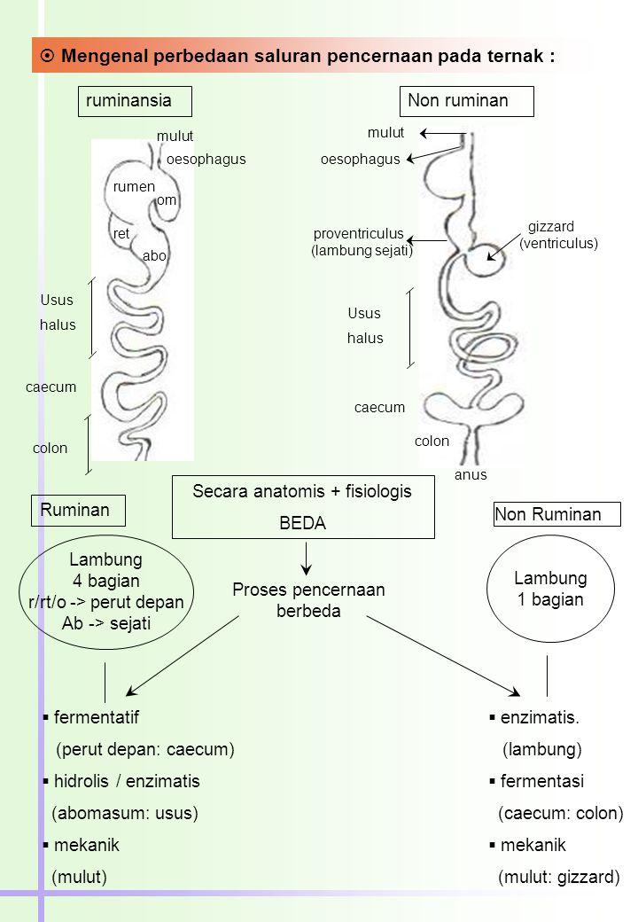 Mengenal perbedaan saluran pencernaan pada ternak :