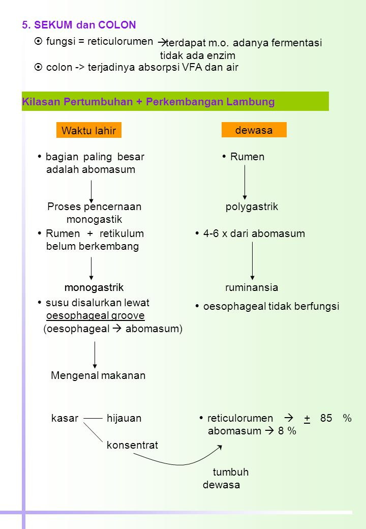 Proses pencernaan monogastik