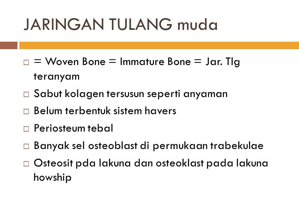 JARINGAN TULANG muda = Woven Bone = Immature Bone = Jar. Tlg teranyam