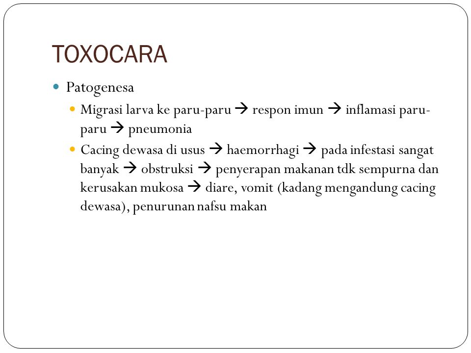 TOXOCARA Patogenesa. Migrasi larva ke paru-paru  respon imun  inflamasi paru- paru  pneumonia.