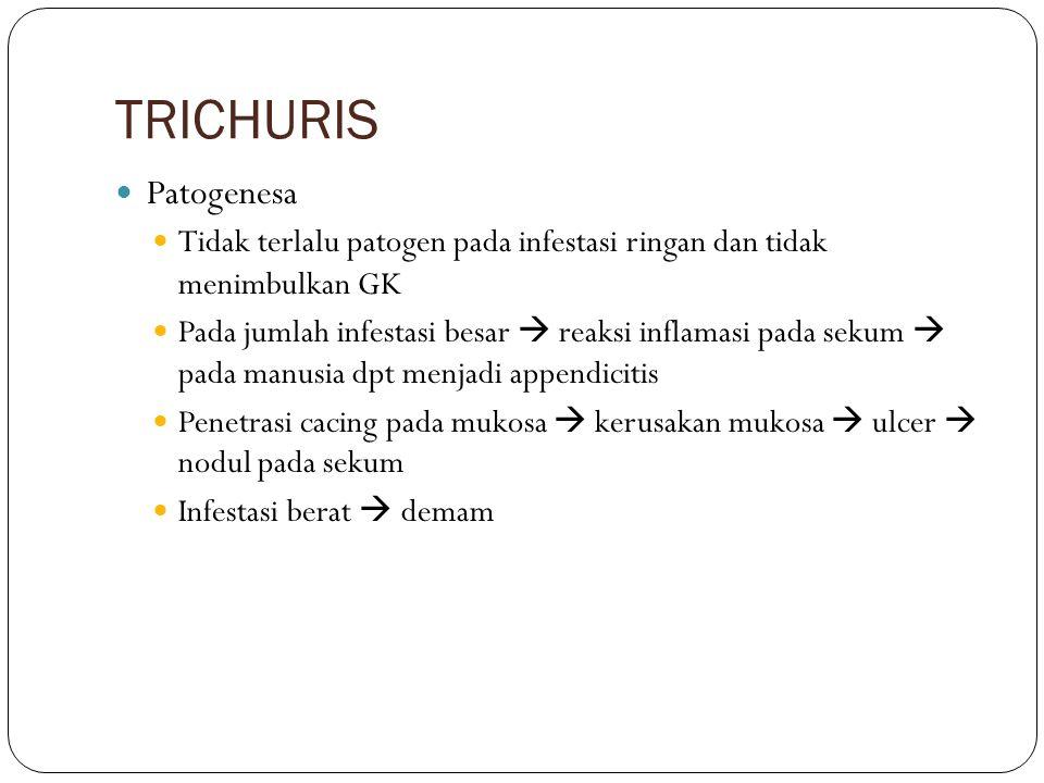 TRICHURIS Patogenesa. Tidak terlalu patogen pada infestasi ringan dan tidak menimbulkan GK.