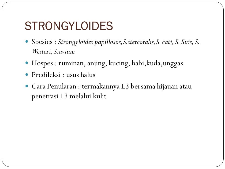 STRONGYLOIDES Spesies : Strongyloides papillosus,S.stercoralis, S. cati, S. Suis, S. Westeri, S.avium.