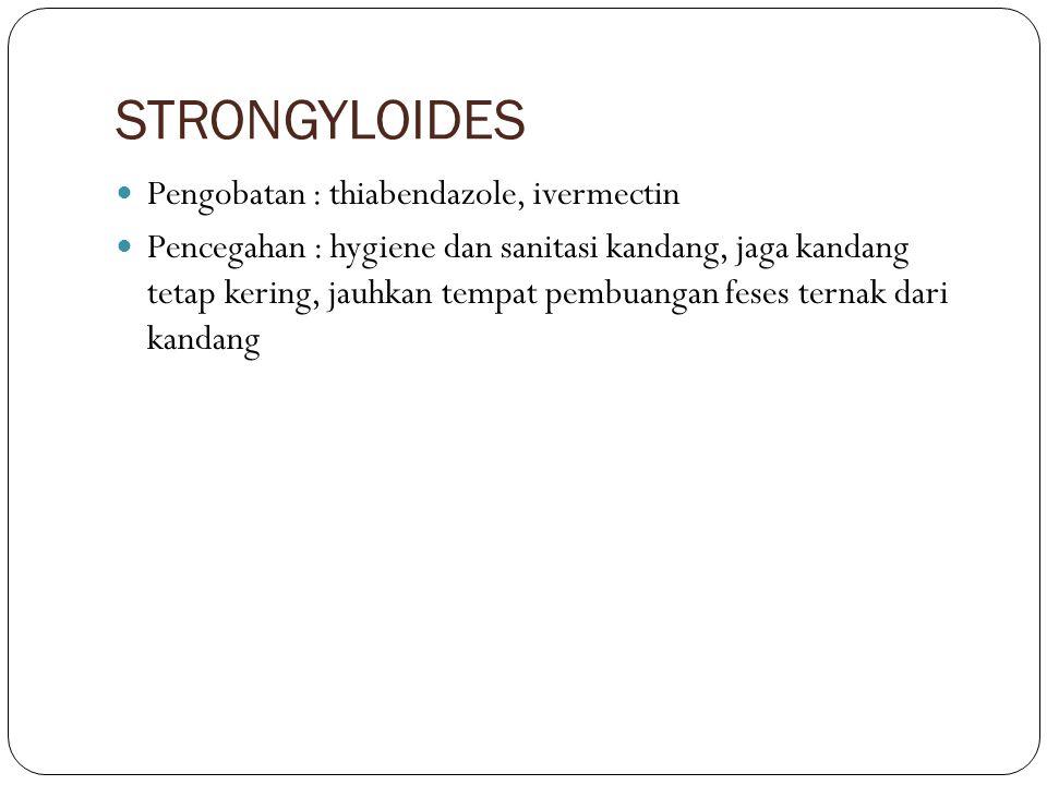 STRONGYLOIDES Pengobatan : thiabendazole, ivermectin