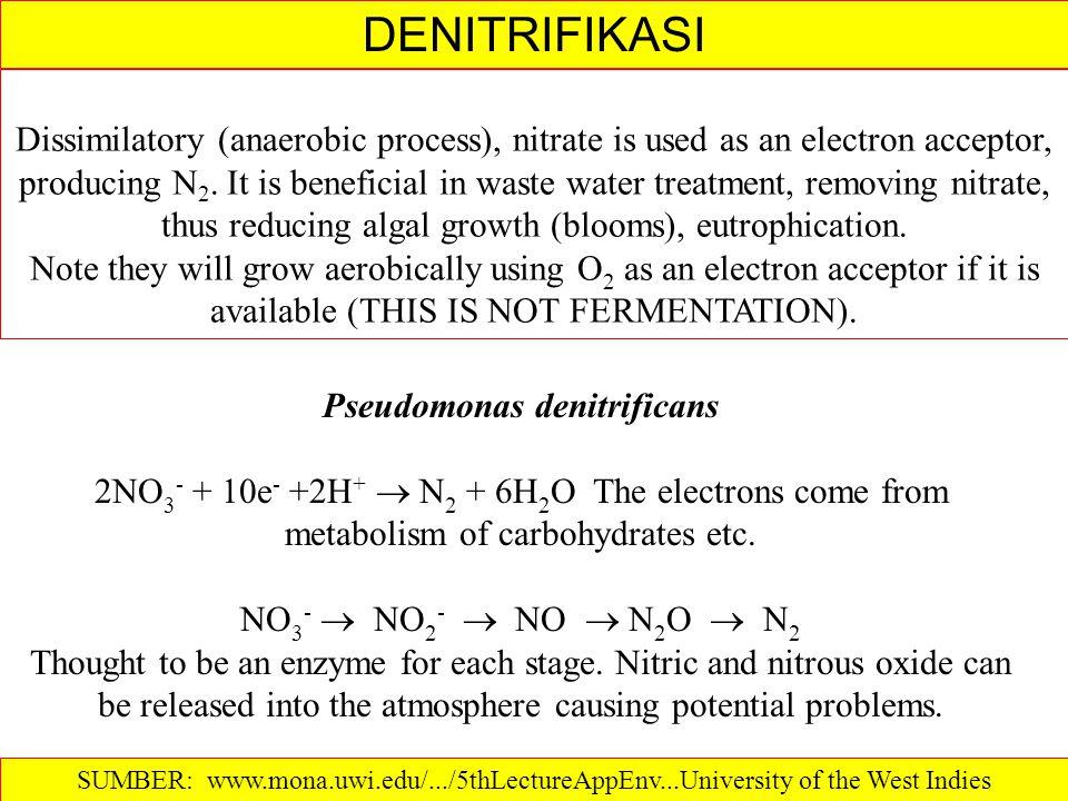 Pseudomonas denitrificans