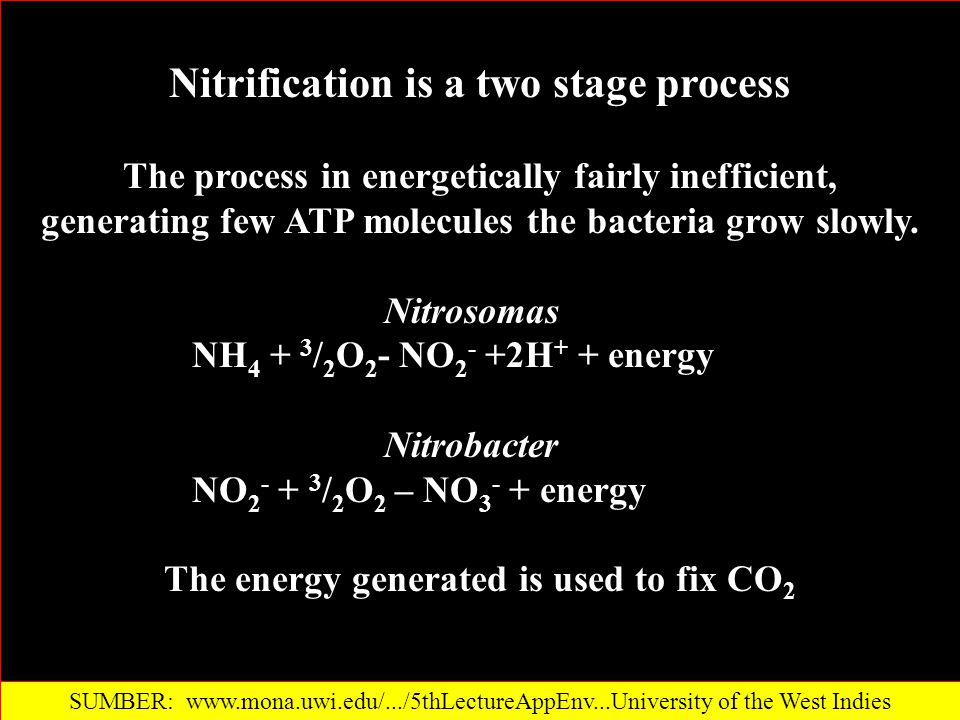 Nitrification is a two stage process