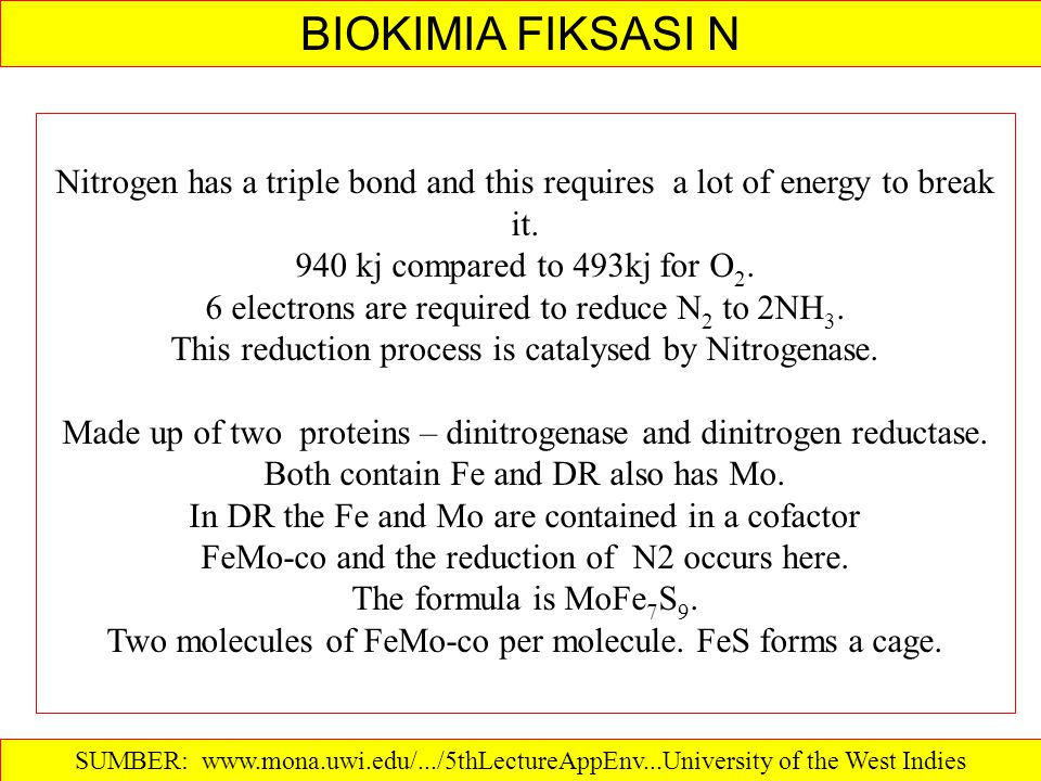 BIOKIMIA FIKSASI N Nitrogen has a triple bond and this requires a lot of energy to break it. 940 kj compared to 493kj for O2.