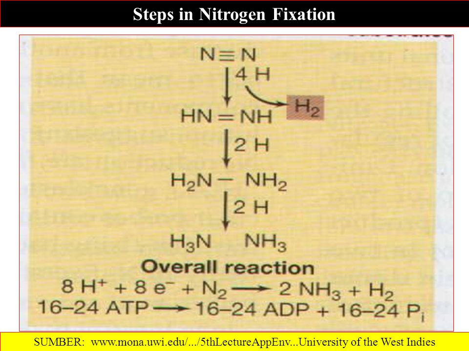Steps in Nitrogen Fixation