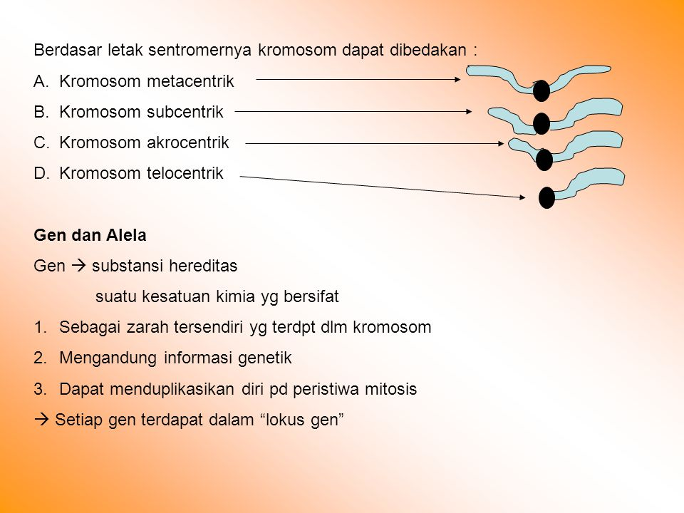 Berdasar letak sentromernya kromosom dapat dibedakan :
