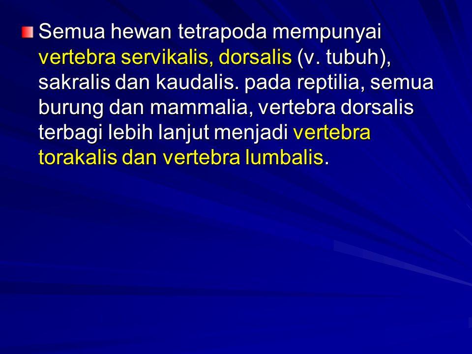 Semua hewan tetrapoda mempunyai vertebra servikalis, dorsalis (v