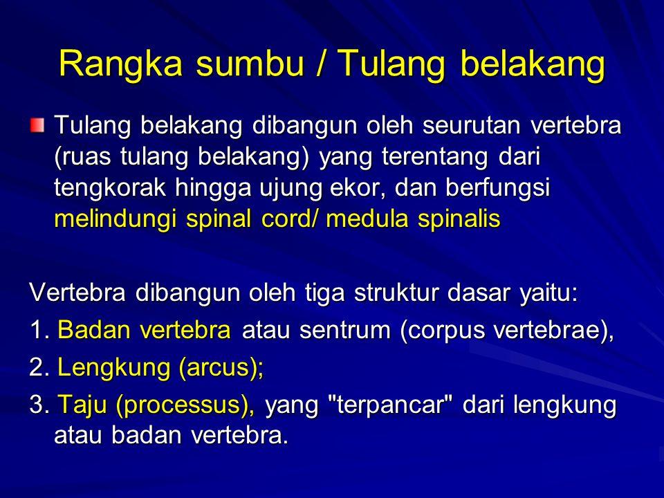 Rangka sumbu / Tulang belakang