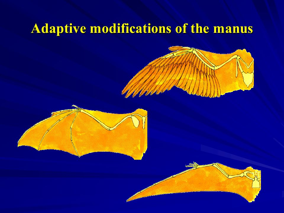 Adaptive modifications of the manus