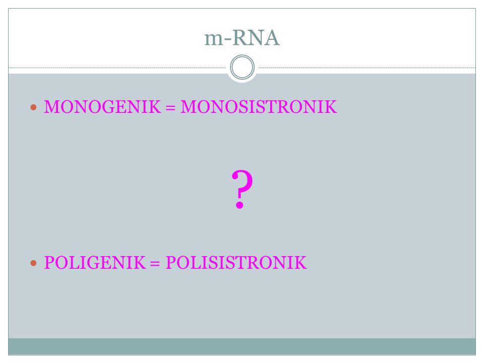 m-RNA MONOGENIK = MONOSISTRONIK POLIGENIK = POLISISTRONIK