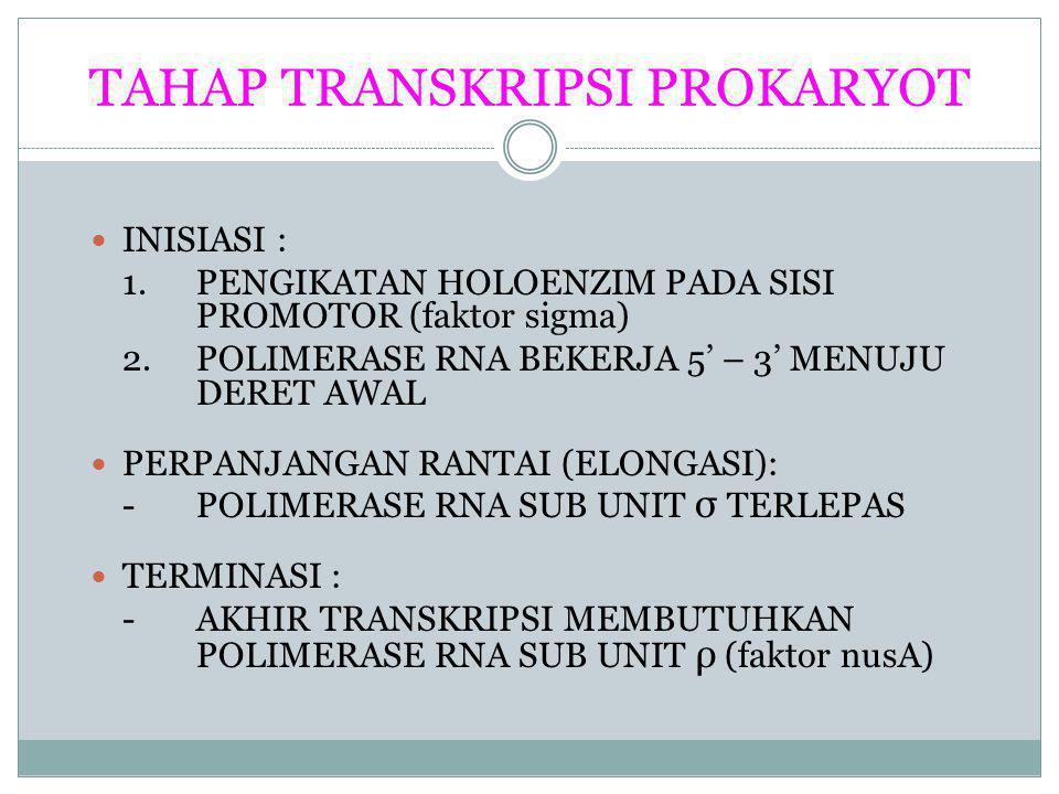 TAHAP TRANSKRIPSI PROKARYOT