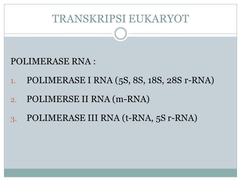 TRANSKRIPSI EUKARYOT POLIMERASE RNA :