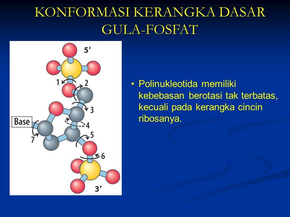 KONFORMASI KERANGKA DASAR GULA-FOSFAT