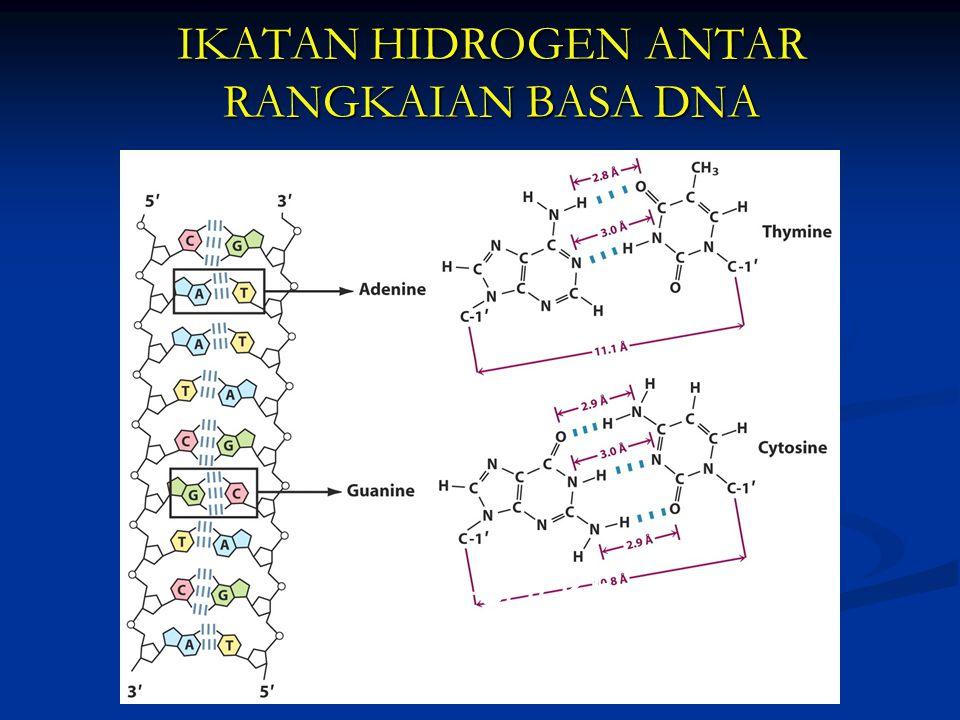 IKATAN HIDROGEN ANTAR RANGKAIAN BASA DNA