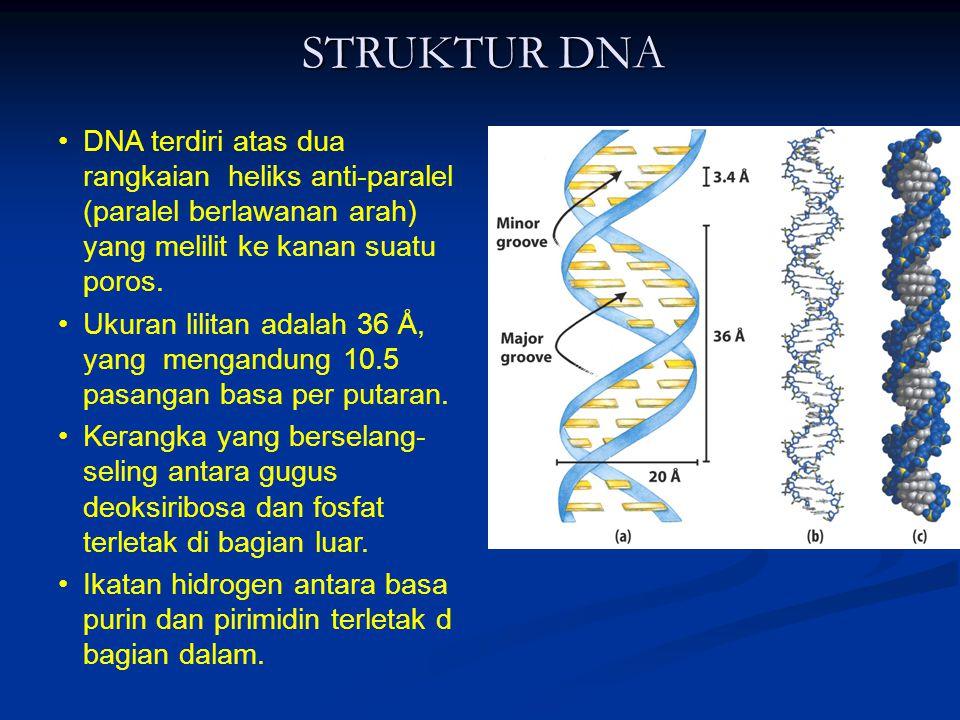 STRUKTUR DNA DNA terdiri atas dua rangkaian heliks anti-paralel (paralel berlawanan arah) yang melilit ke kanan suatu poros.