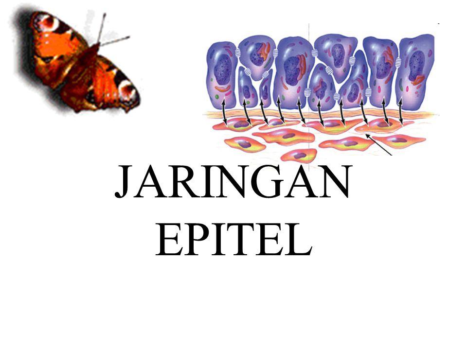 JARINGAN EPITEL JARINGAN EPITEL