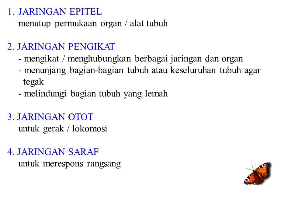 JARINGAN EPITEL menutup permukaan organ / alat tubuh. 2. JARINGAN PENGIKAT. - mengikat / menghubungkan berbagai jaringan dan organ.