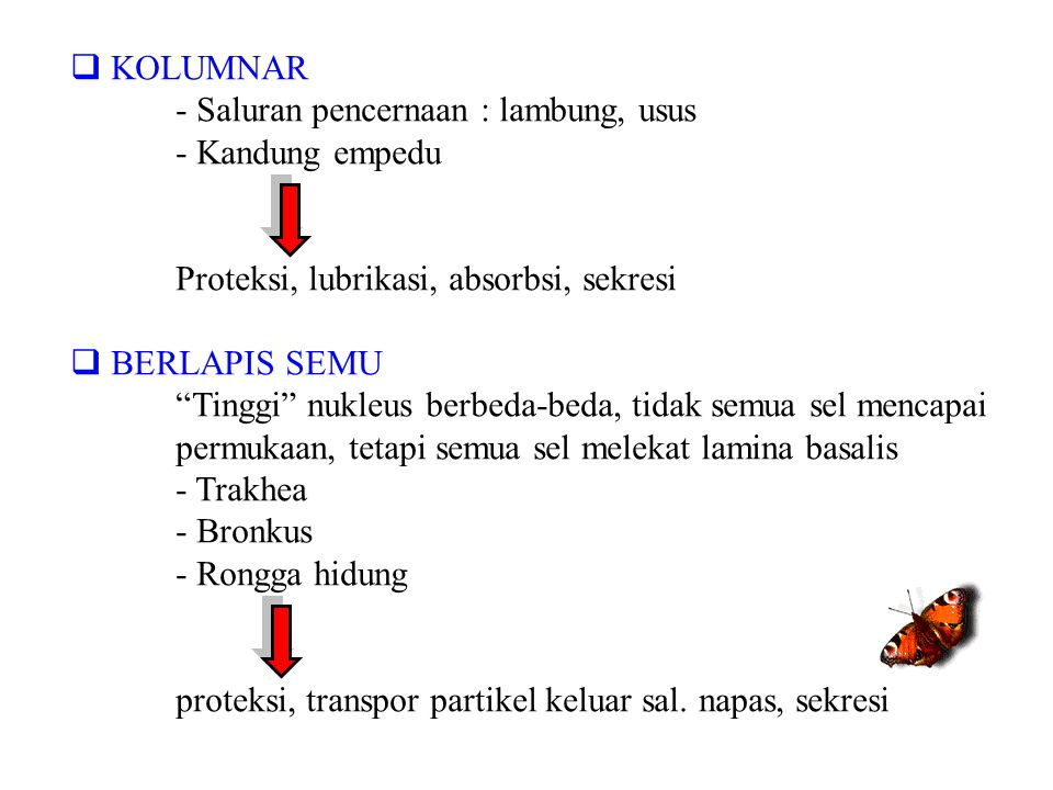 KOLUMNAR - Saluran pencernaan : lambung, usus. - Kandung empedu. Proteksi, lubrikasi, absorbsi, sekresi.