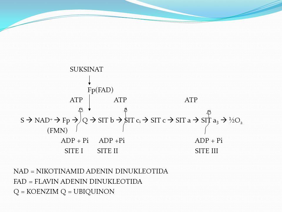 SUKSINAT Fp(FAD) ATP ATP ATP S  NAD+  Fp  Q  SIT b  SIT c1  SIT c  SIT a  SIT a3  ½O2 (FMN) ADP + Pi ADP +Pi ADP + Pi SITE I SITE II SITE III NAD = NIKOTINAMID ADENIN DINUKLEOTIDA FAD = FLAVIN ADENIN DINUKLEOTIDA Q = KOENZIM Q = UBIQUINON