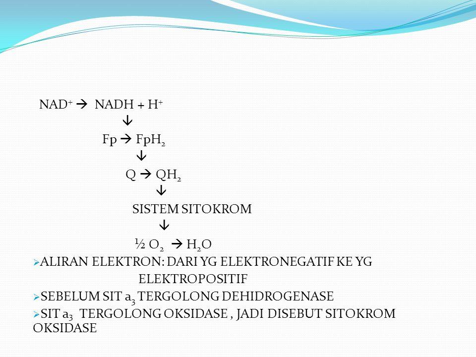 NAD+  NADH + H+  Fp  FpH2. Q  QH2. SISTEM SITOKROM. ½ O2  H2O. ALIRAN ELEKTRON: DARI YG ELEKTRONEGATIF KE YG.