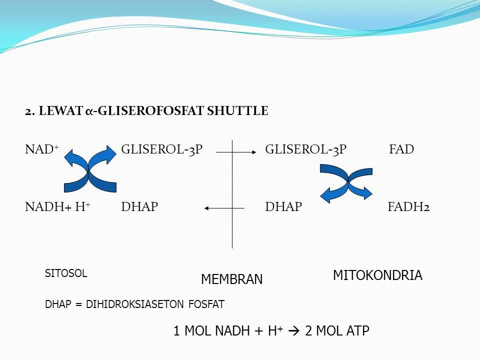2. LEWAT α-GLISEROFOSFAT SHUTTLE NAD+ GLISEROL-3P GLISEROL-3P FAD NADH+ H+ DHAP DHAP FADH2