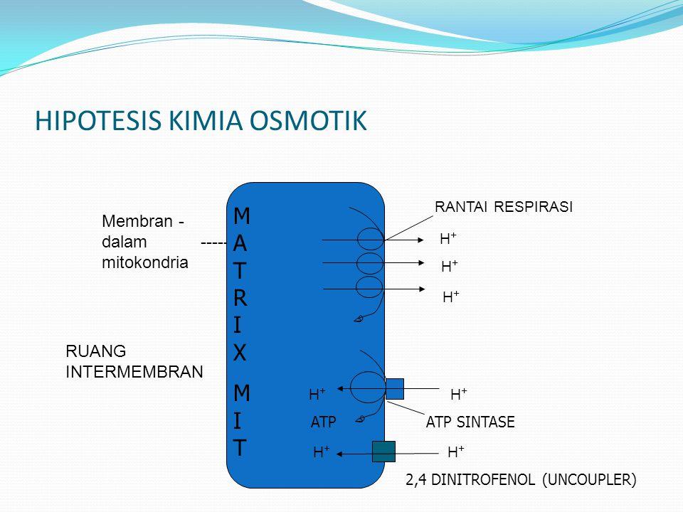 HIPOTESIS KIMIA OSMOTIK