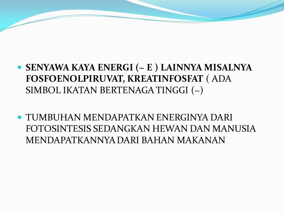 SENYAWA KAYA ENERGI (~ E ) LAINNYA MISALNYA FOSFOENOLPIRUVAT, KREATINFOSFAT ( ADA SIMBOL IKATAN BERTENAGA TINGGI (~)