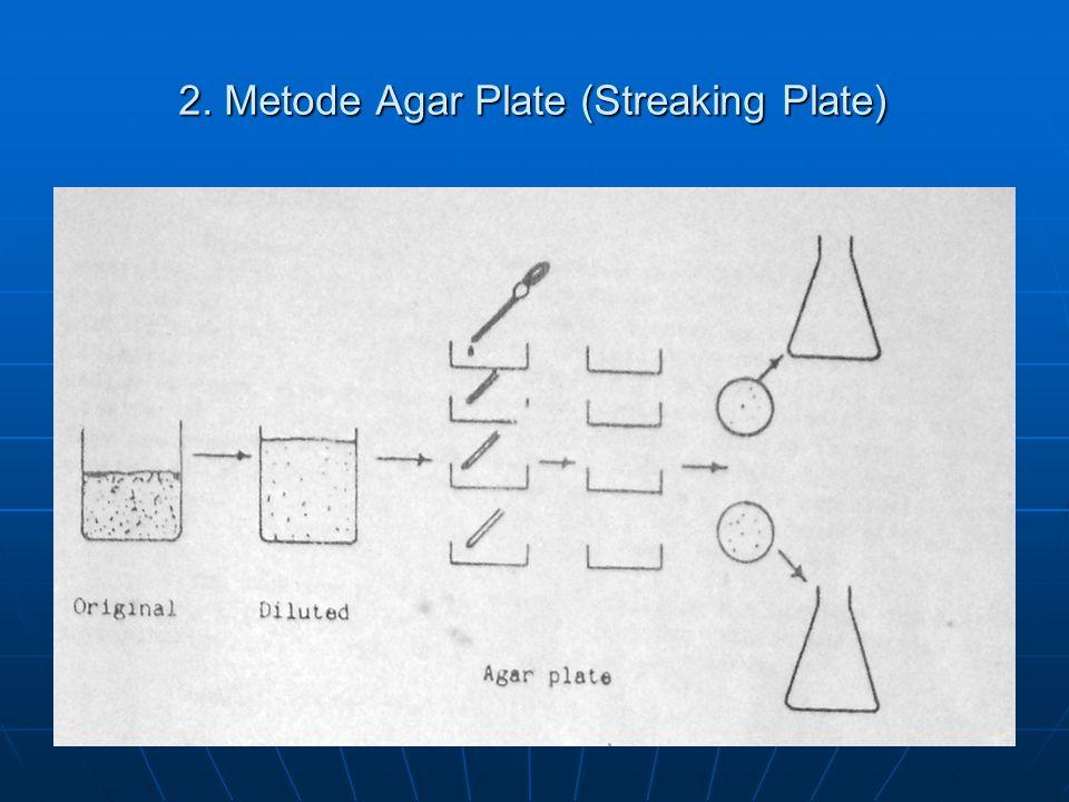 2. Metode Agar Plate (Streaking Plate)