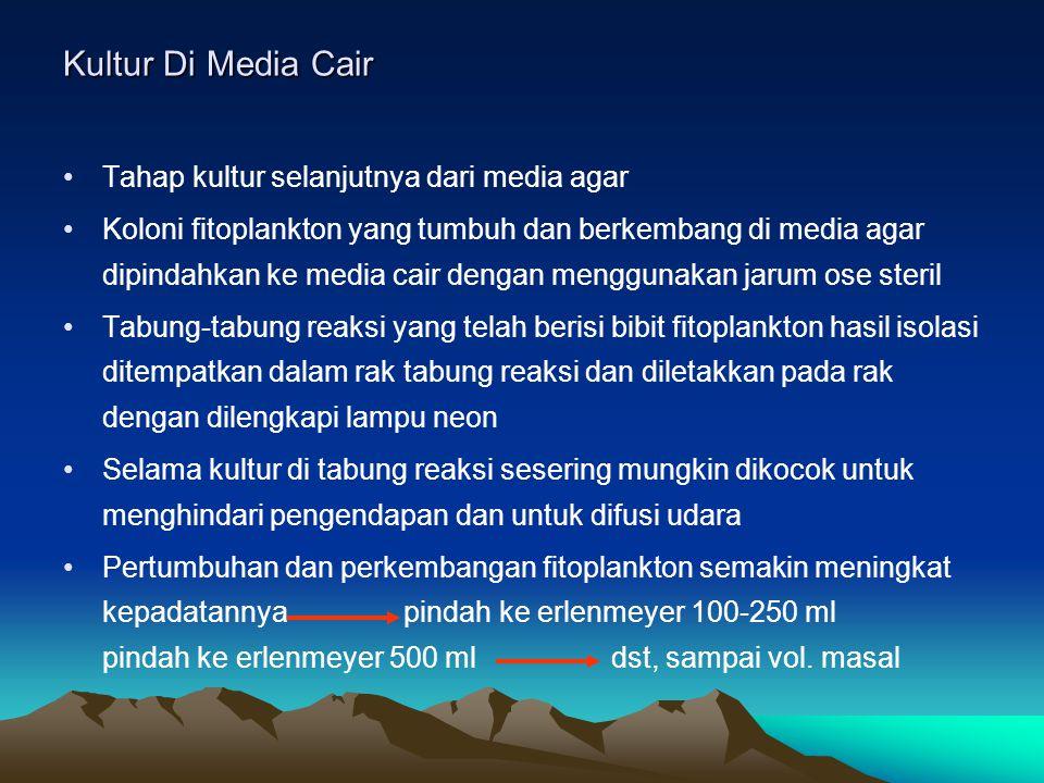 Kultur Di Media Cair Tahap kultur selanjutnya dari media agar
