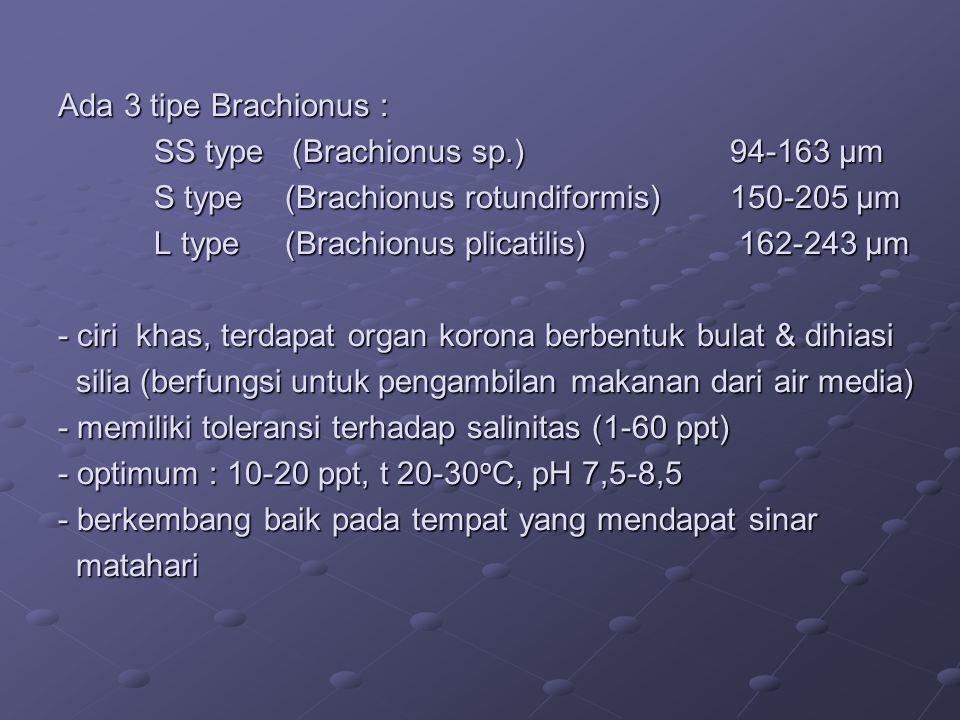 Ada 3 tipe Brachionus :. SS type (Brachionus sp. ). 94-163 μm. S type