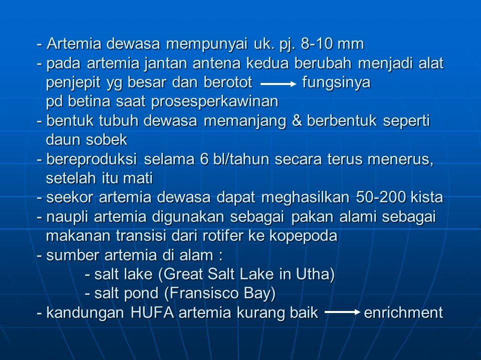 Artemia dewasa mempunyai uk. pj