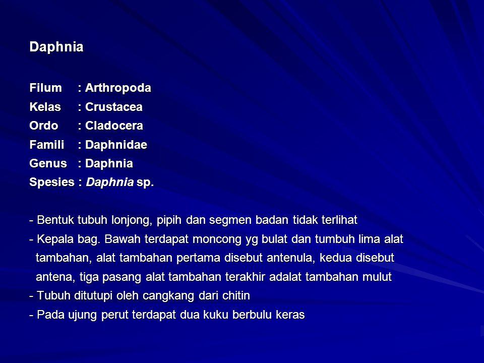 Daphnia Filum : Arthropoda Kelas : Crustacea Ordo : Cladocera Famili : Daphnidae Genus : Daphnia Spesies : Daphnia sp.