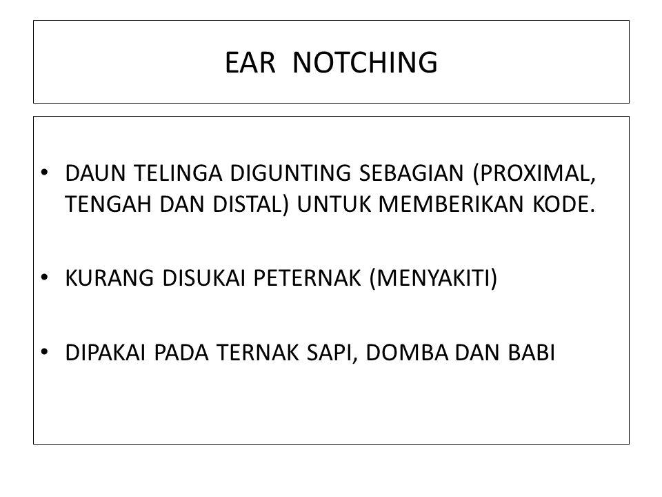 EAR NOTCHING DAUN TELINGA DIGUNTING SEBAGIAN (PROXIMAL, TENGAH DAN DISTAL) UNTUK MEMBERIKAN KODE. KURANG DISUKAI PETERNAK (MENYAKITI)