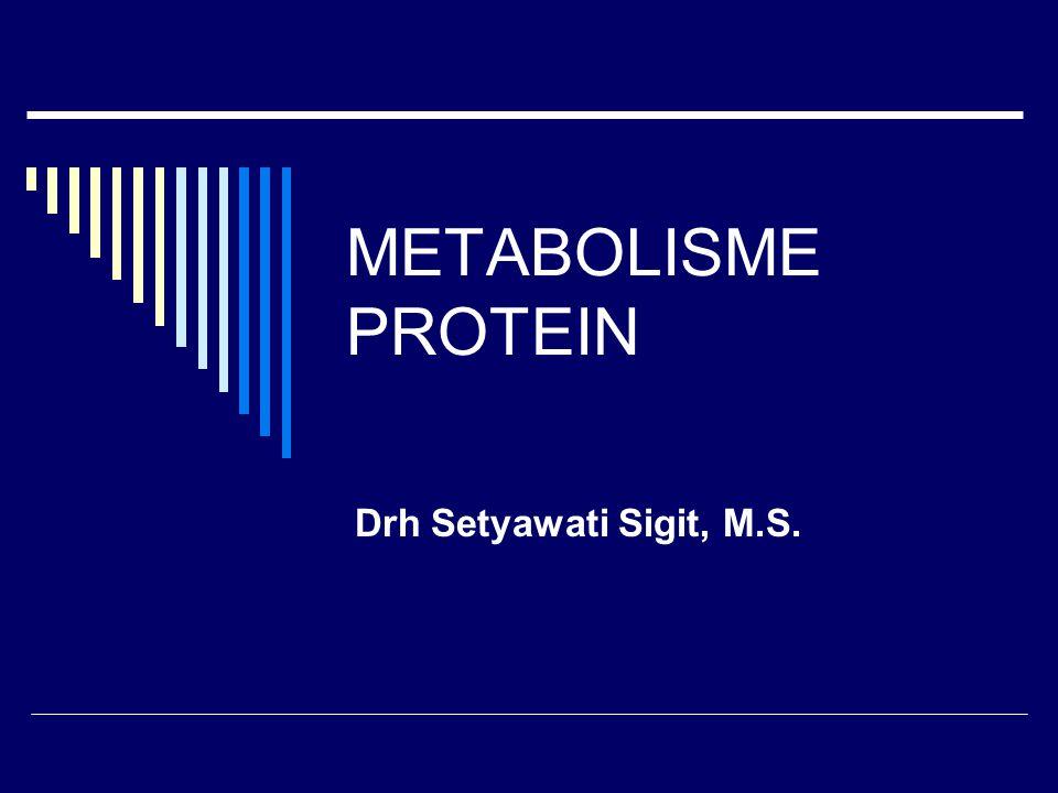 METABOLISME PROTEIN Drh Setyawati Sigit, M.S.